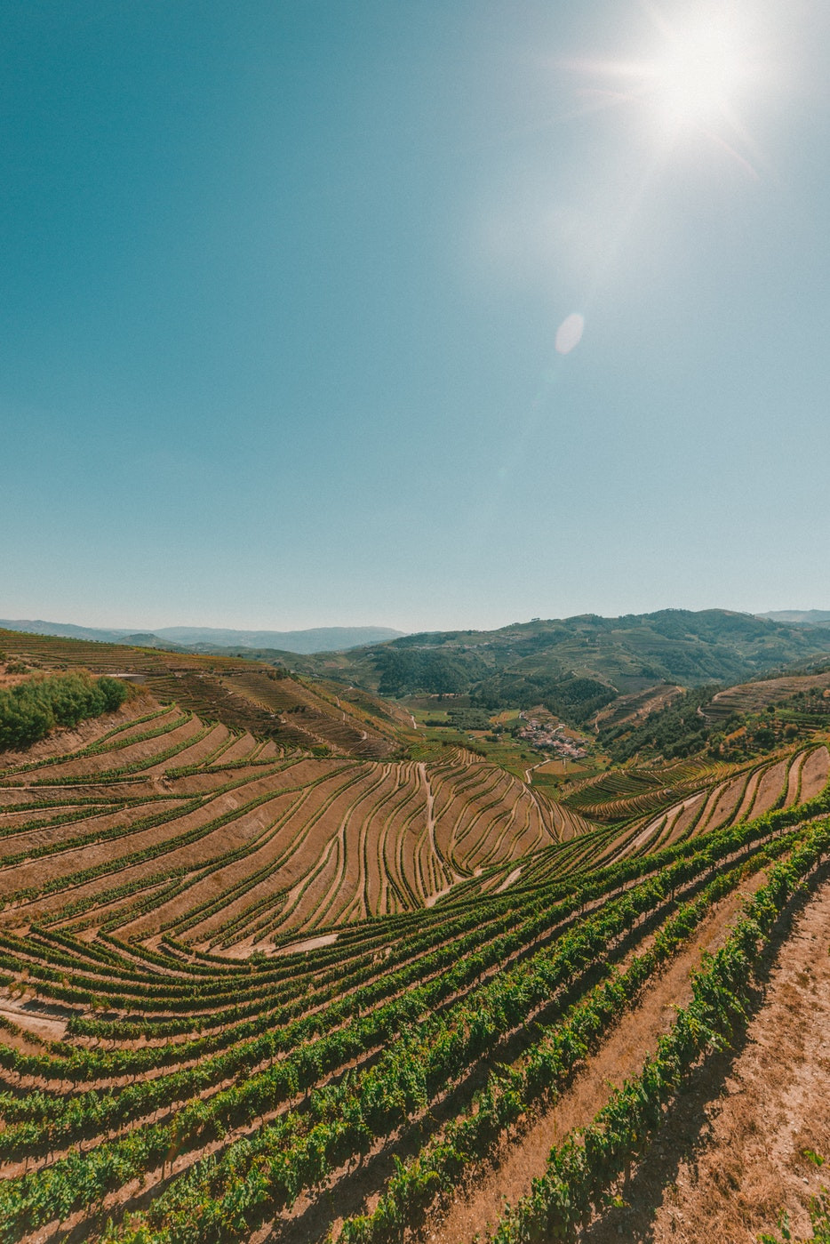The complex system of vineyards in the Douro Wine Region