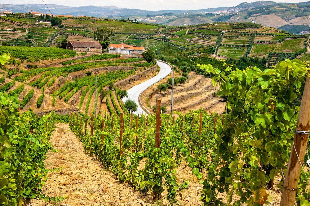 Vivid image of the intricate vineyard layouts in the Douro Wine Region