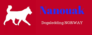 Nanouak Dogsledding Norway chien de traîneau en Norvège