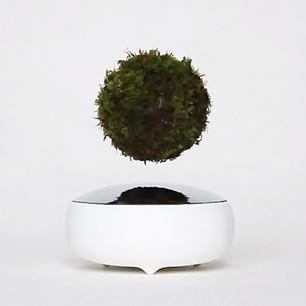 AIR BONSAI: PLANTAS QUE LEVITAN   AIR BONSAI: LEVITATING PLANTS