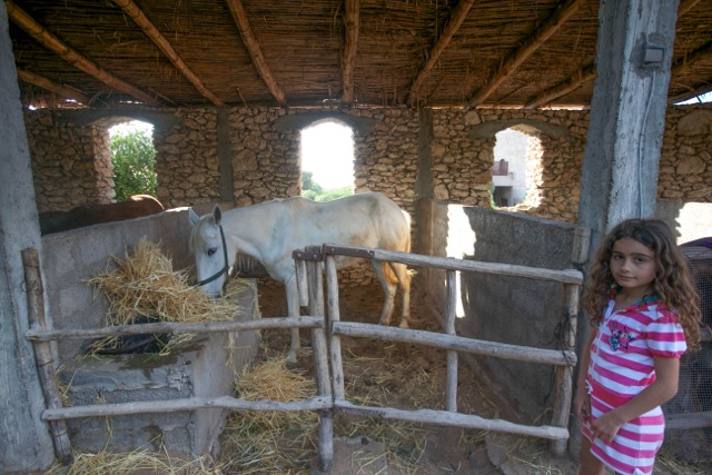 Arakiss in her stable