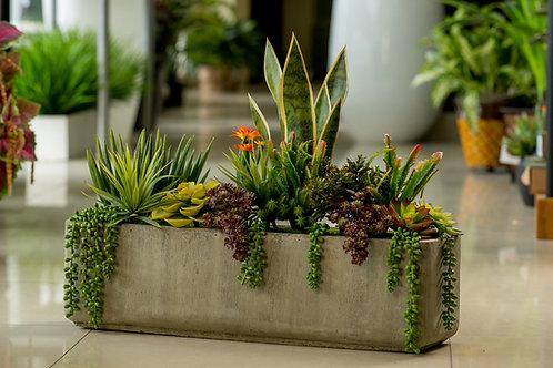 Jardin cactus mini