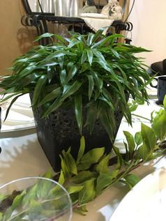 Centro de mesa con plantas verdes.