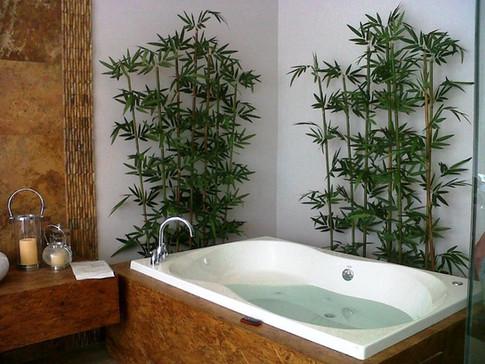 Ambientación con árboles de Bambú en sala de exhibición de tinas de baño.