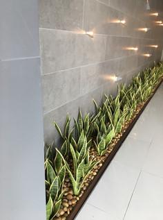 Jardín con plantas Lengua de suegra en PH