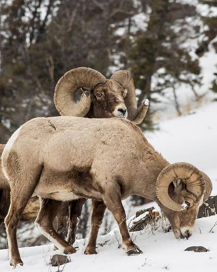 Yellowstone 2018-474.jpeg