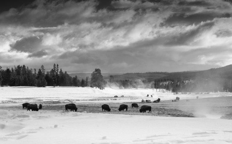 Yellowstone 2018-673-2.jpeg