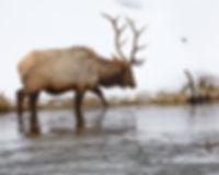 Yellowstone 2018-65.jpeg