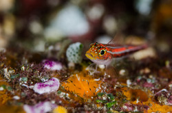 Indonesia2012-©Anders_Nyberg8938