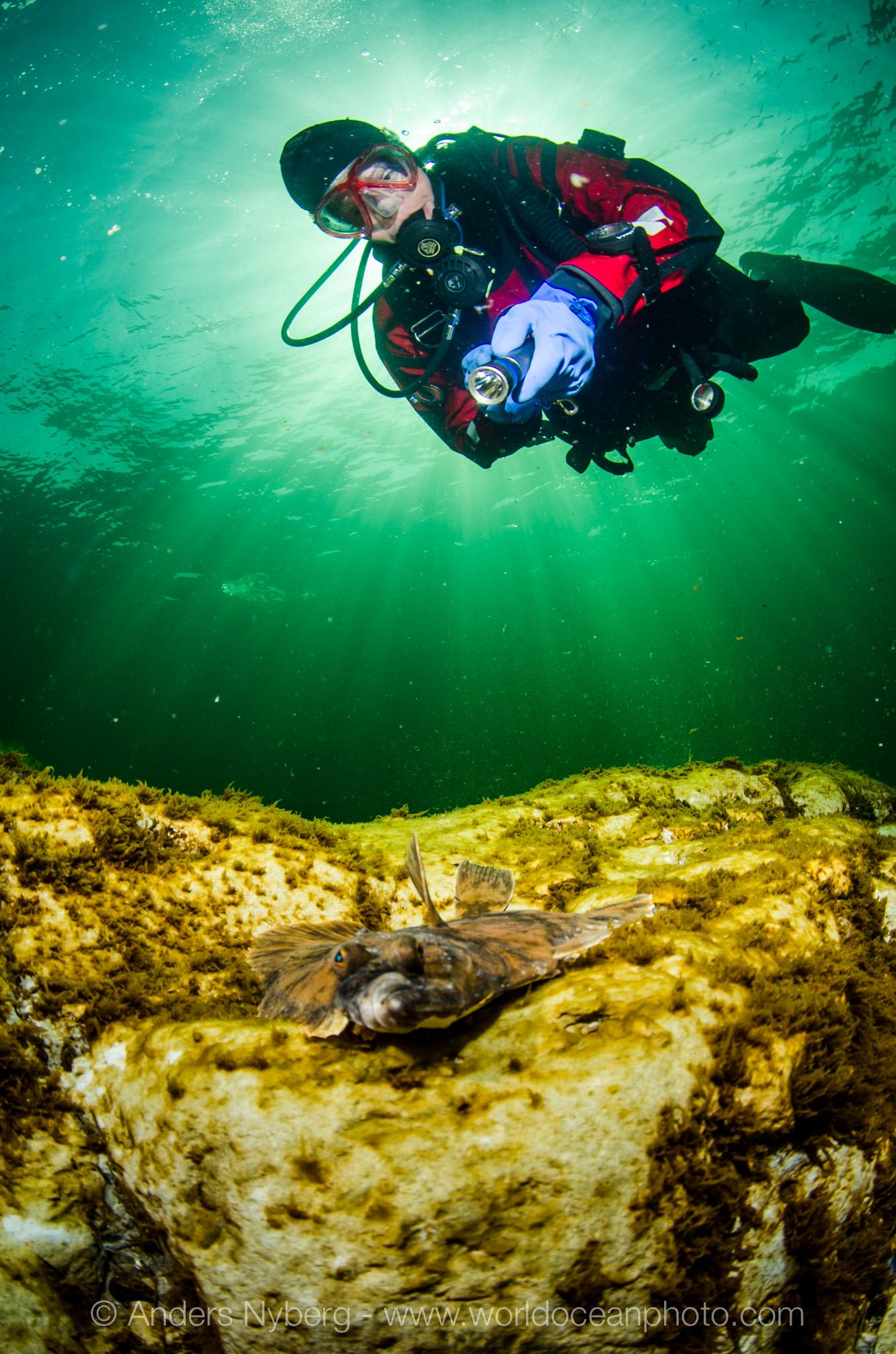Gotland-Stenkyrkehuk-©Anders_Nyberg-3113