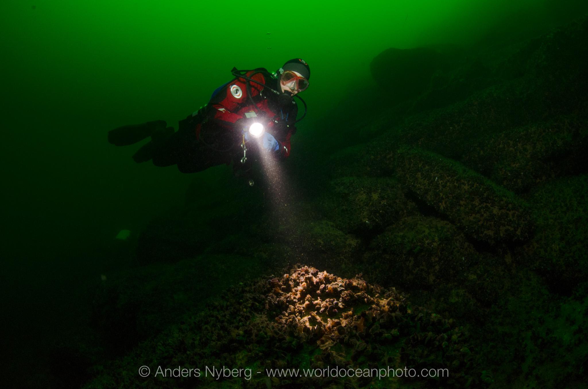 Gotland-Digerhuvud-©Anders_Nyberg-3244