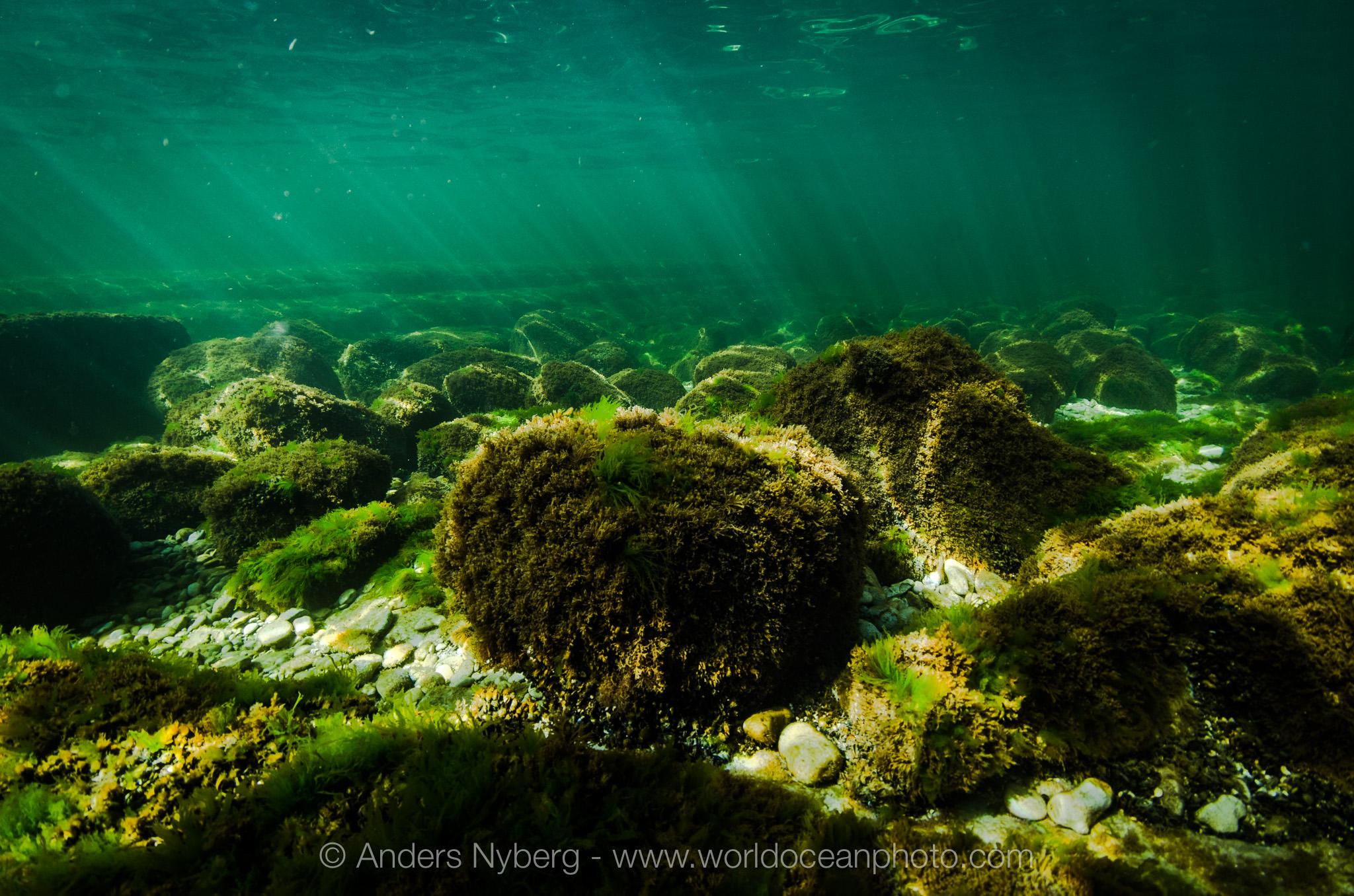 Gotland-Stenkyrkehuk-©Anders_Nyberg-2946