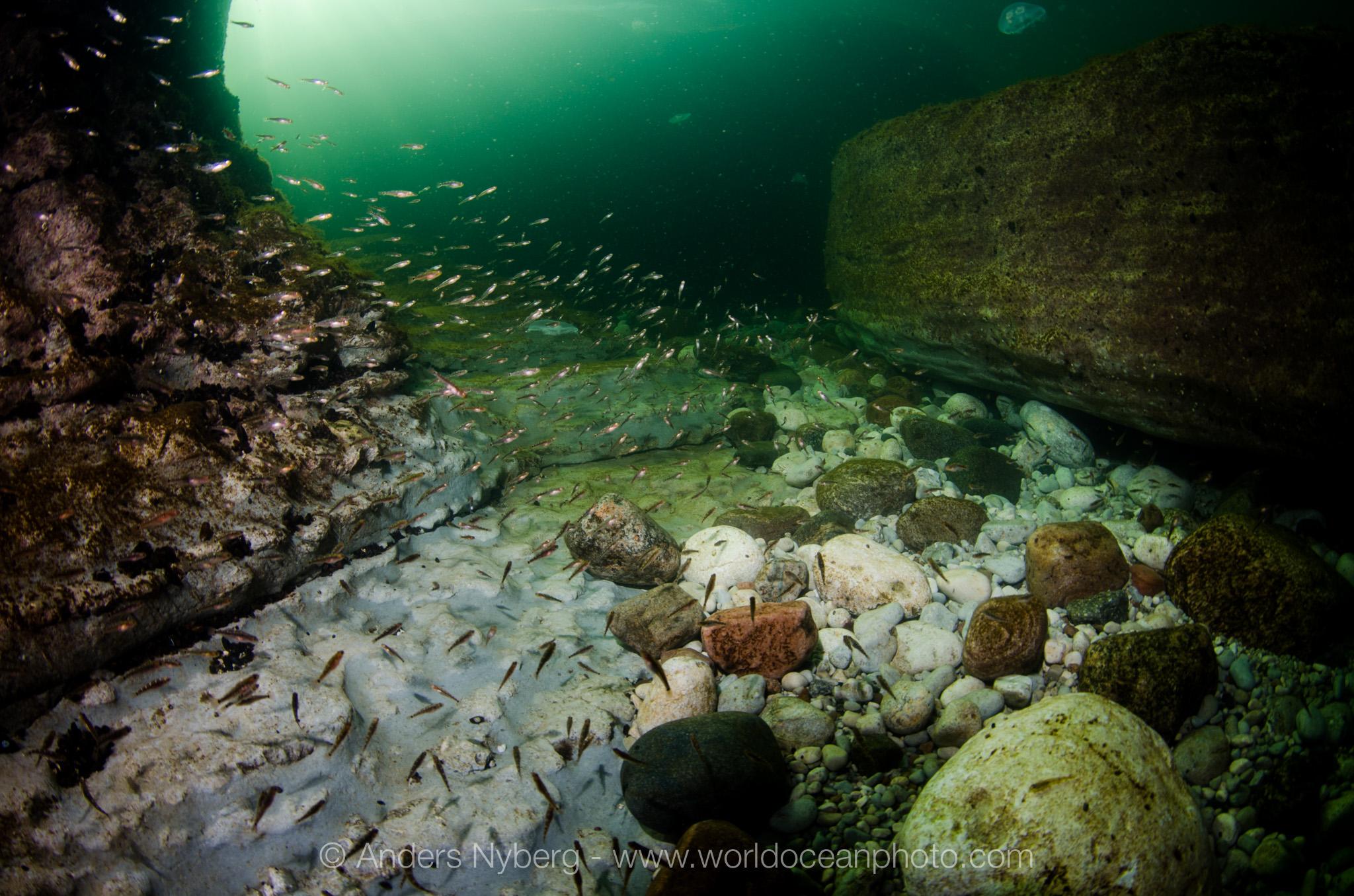 Gotland-©Anders_Nyberg-1526