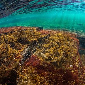 Underwater Seascapes