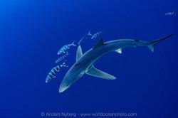 www.worldoceanphoto.com