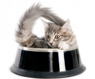 kitten-dog-s-food-bowl-white_262668-50_e