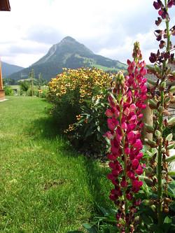 Unser Garten, Haus Edelgrün