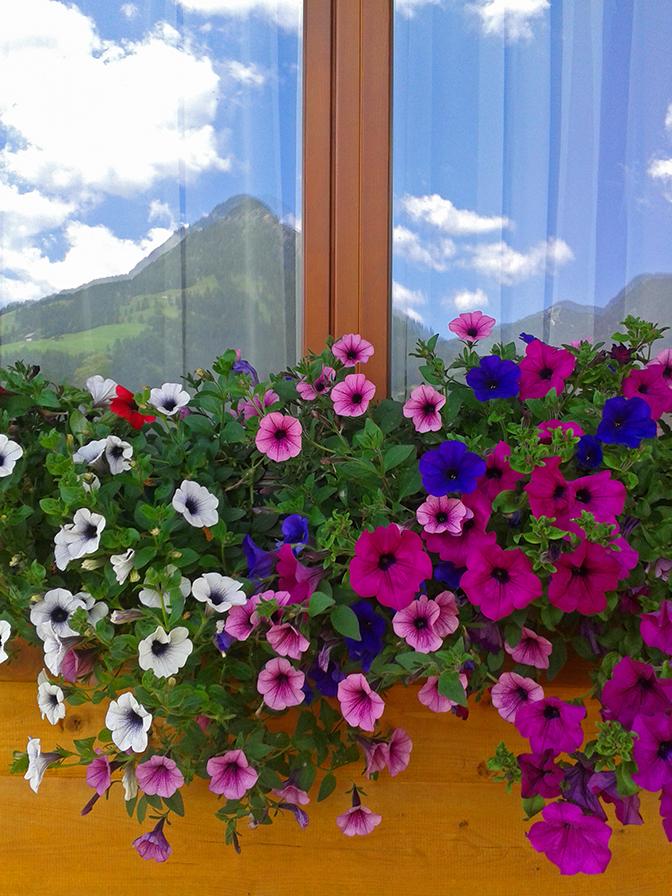 Blumenschmuck, Haus Edelgrün