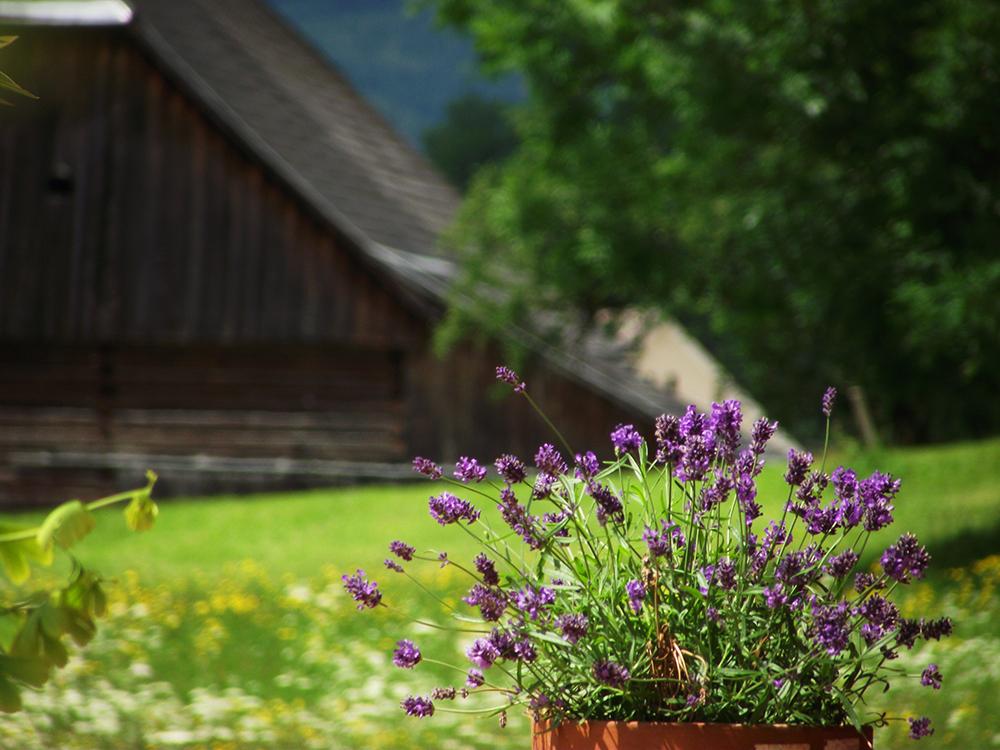 Sommerblüte, Haus Edelgrün