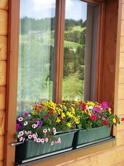Haus Edelgrün Sommerblüte