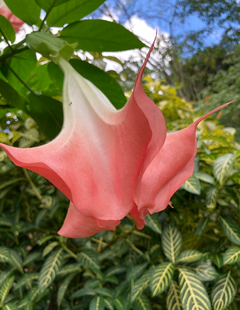 bell flower.png
