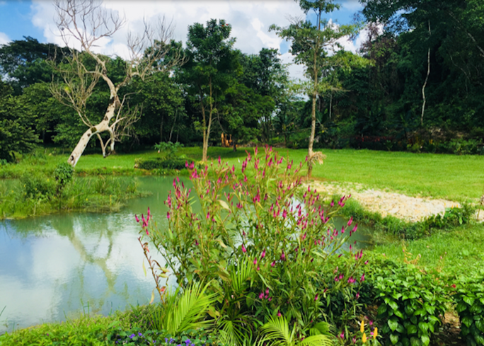 View of the pond.png