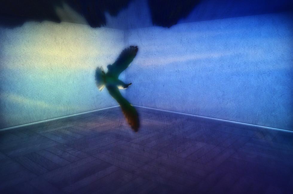 Aria - camera obscura 2