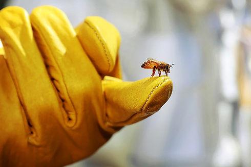 Bee-Apiary_Glove.jpg