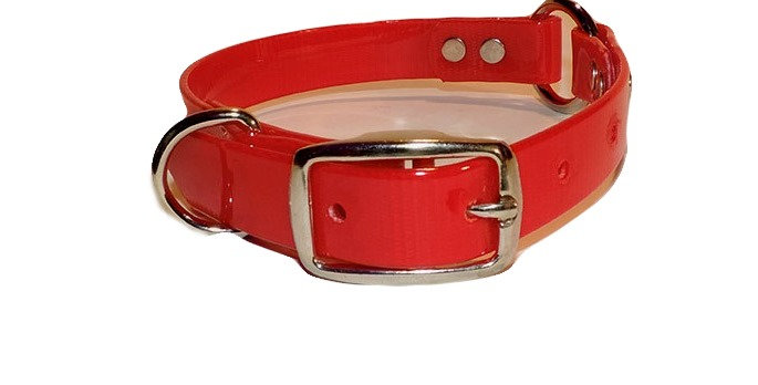3/4 inch Red dayglo center ring and Dee Ring dog collar