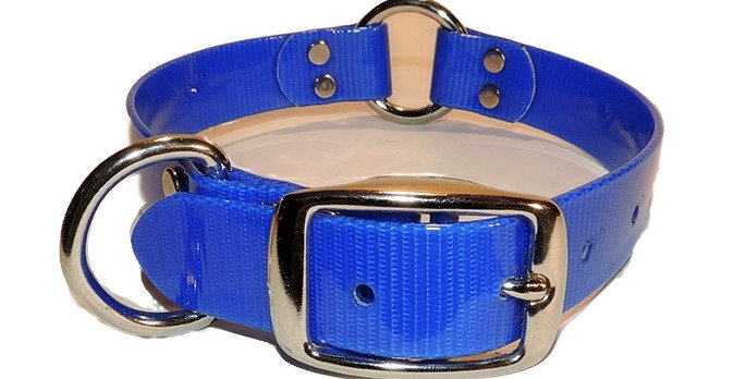 Neon oranBlue 1 inch wide dayglo dog collar with Dee ring and center ring.
