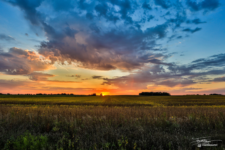 Bean Field Sunrise