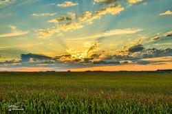 Iowa Sunshine