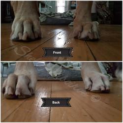 Jan 9 2019 - Moose Feet (2)