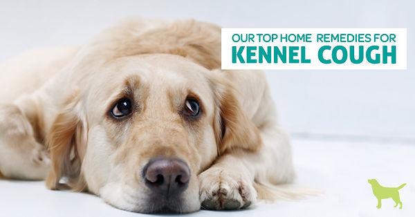 KENNEL-COUGH.jpg