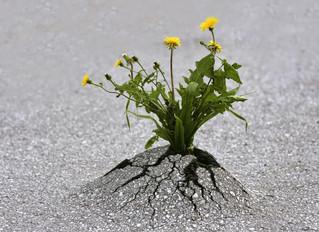Primavera: consigli pratici per avere più energia.