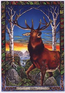 Il Cervo e la sua Guarigione