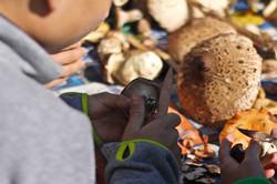 Zubereitung von Pilzen