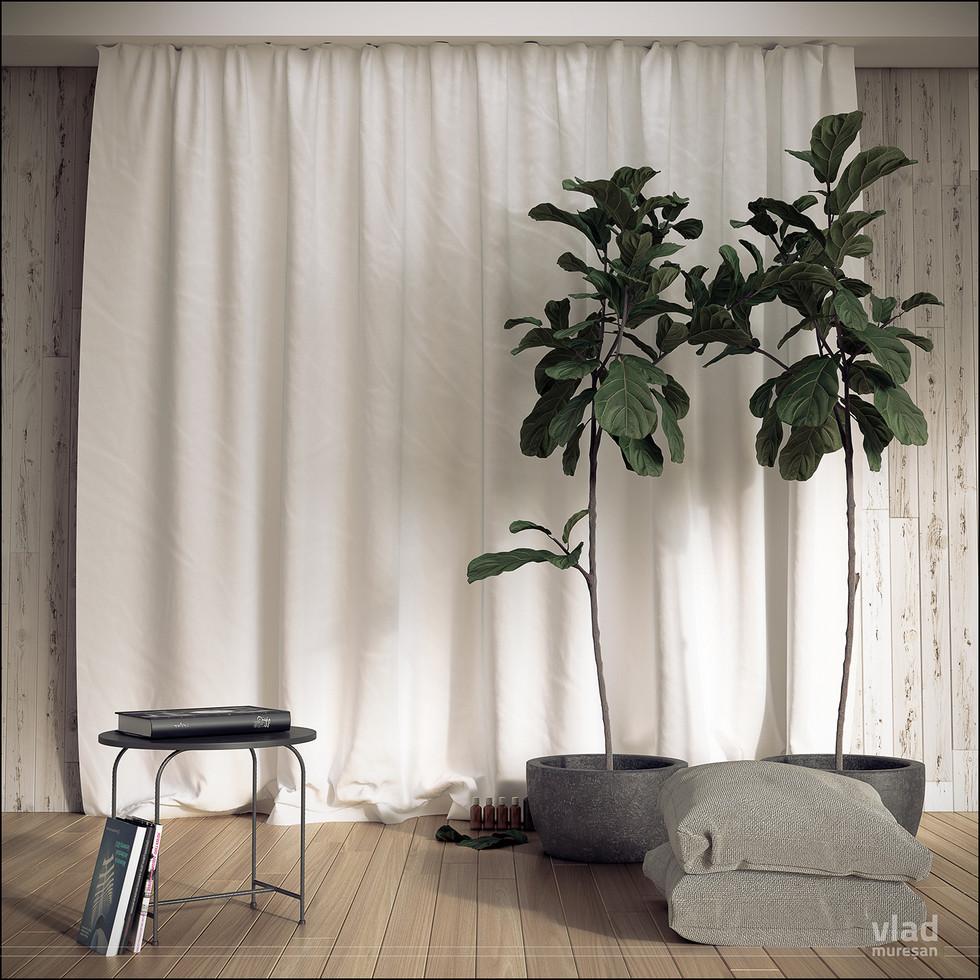 Ficus_004.jpg