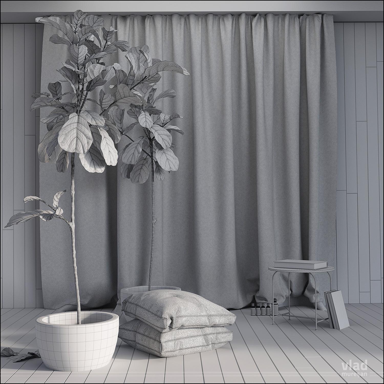 Ficus_002.jpg