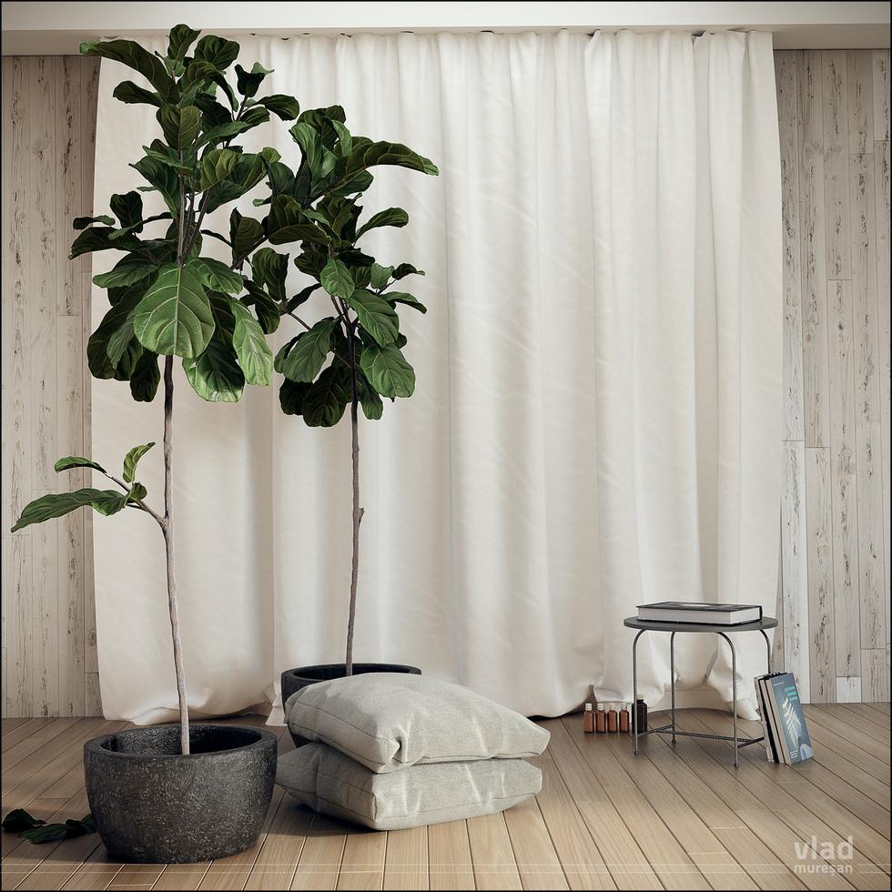 Ficus_003.jpg