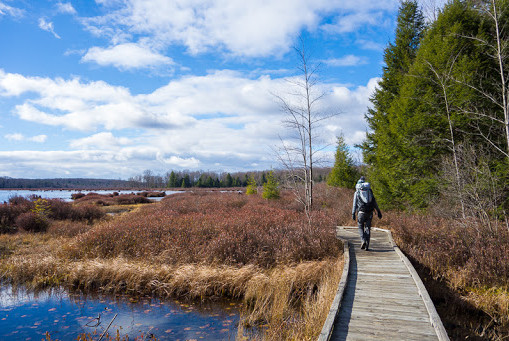 Trail Hiking - A Fresh Look at Black Moshannon State Park's Scenic Nature Trails
