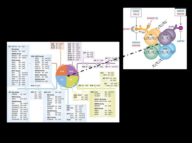 Histone Pics.png
