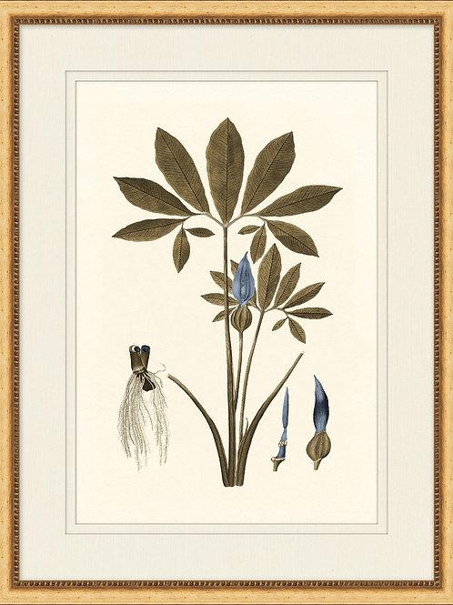 Botany Study Blue 1
