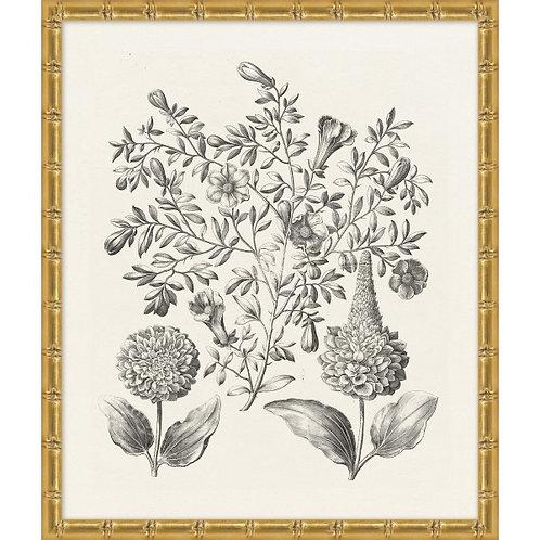 Neutral Botanical Study 1