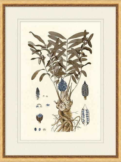 Botany Study Blue 2