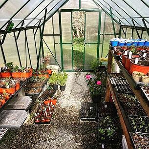 #greenhouse #growth #flowerfarm #flowers #Colorado #sedalia #herbs #seed #plant #garden #g