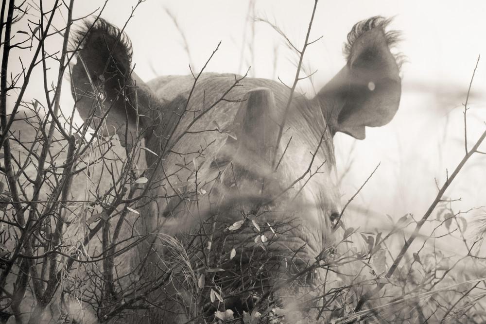 Karen Lowe Photography