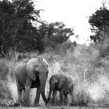 Elephant & baby BW.jpg