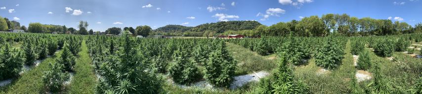 THS Farm Hemp Grow