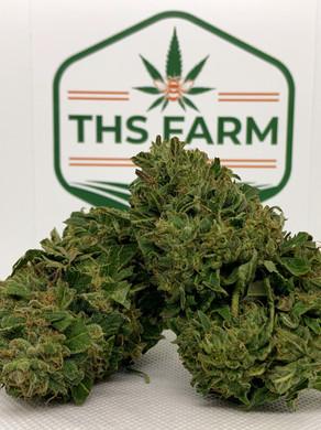THS Farm's Best CBD Strains